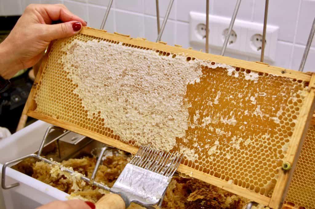 Entdeckelung einer Honigwabe