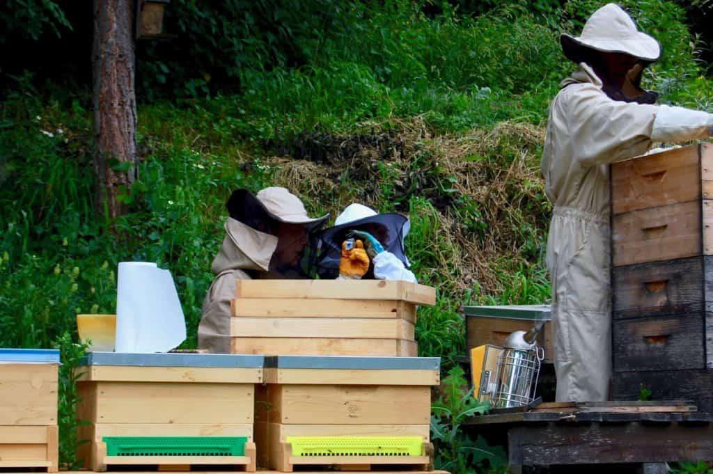 Honigernte: Überprüfung Wassergehalt