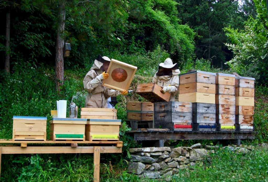 Honigernte: Einsetzen der Bienenflucht