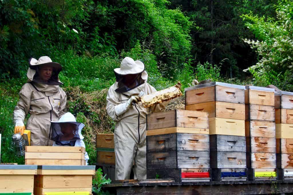 Honigernte: Kontrolle der Waben