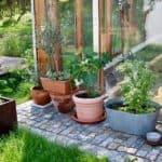 Gartenspaziergang: Pflanzen vor dem Glashaus
