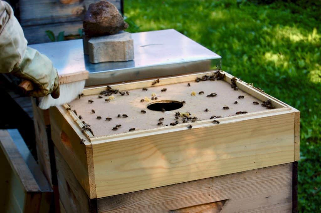 Bienchen zurück in den Stock kehren