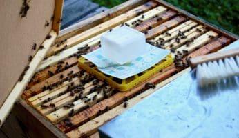 Varroabehandlung