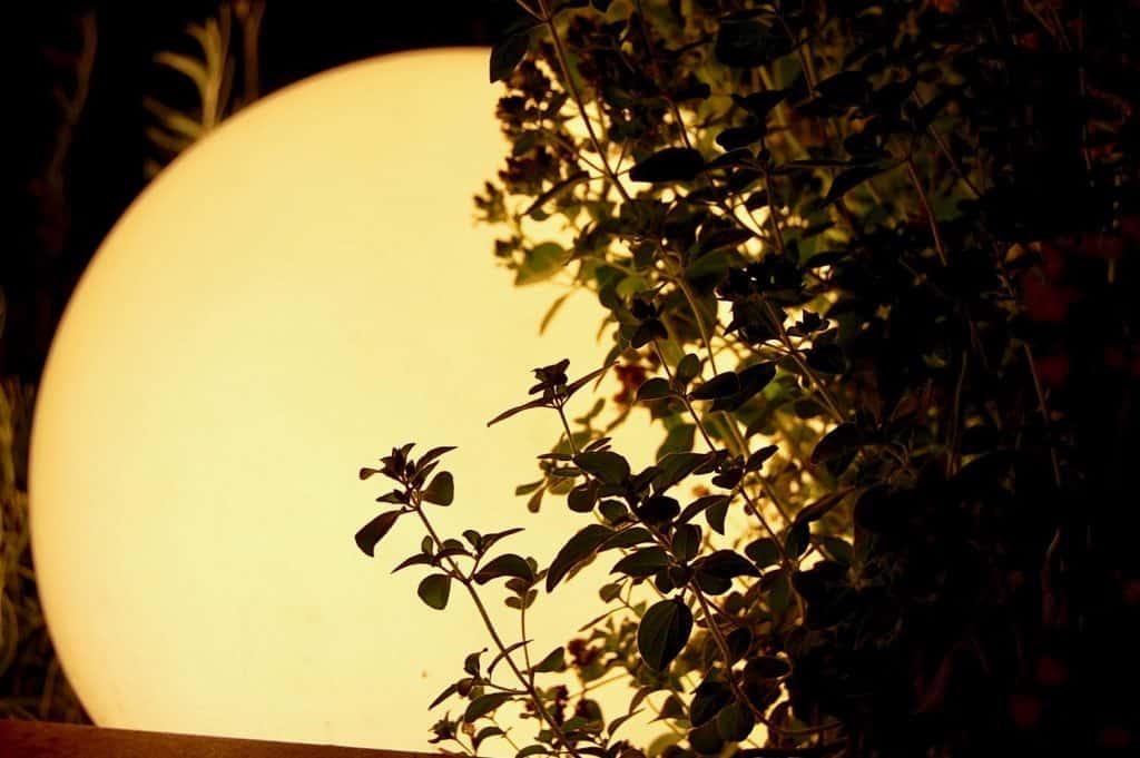 Mond im Kräuterbeet