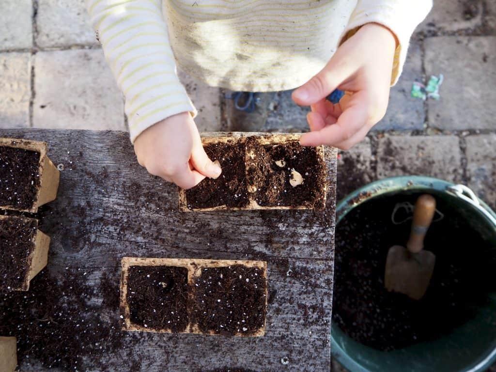 Samen in die Erde drücken