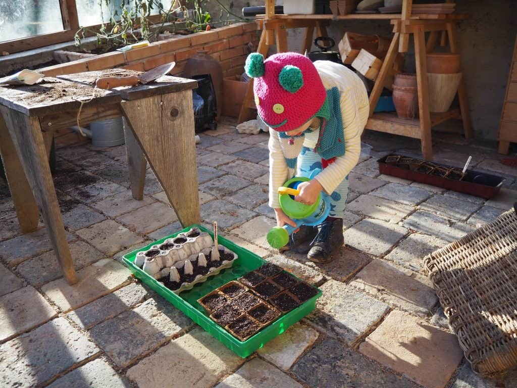 frisch gesäte Samen eingießen