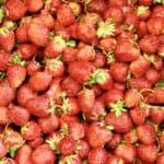 Einfache Erdbeerrezepte