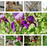 Ein Monat in Bildern - Mai