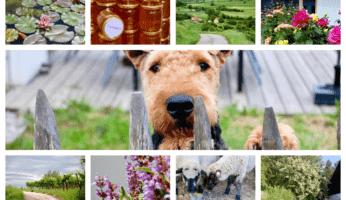 Ein Monat in Bildern: Juni 2020