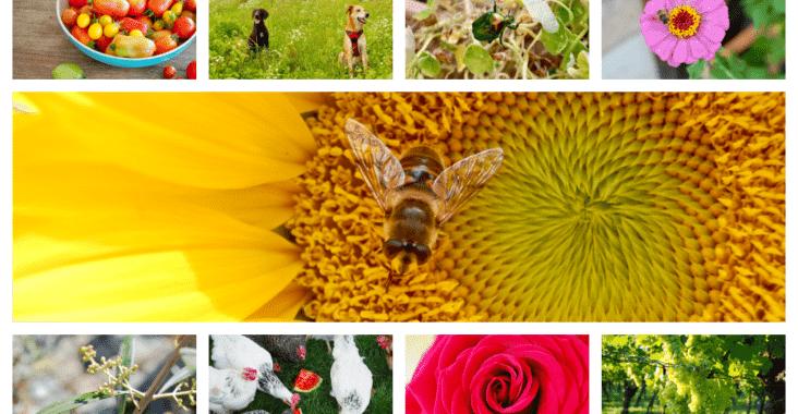 Ein Monat in Bildern: August