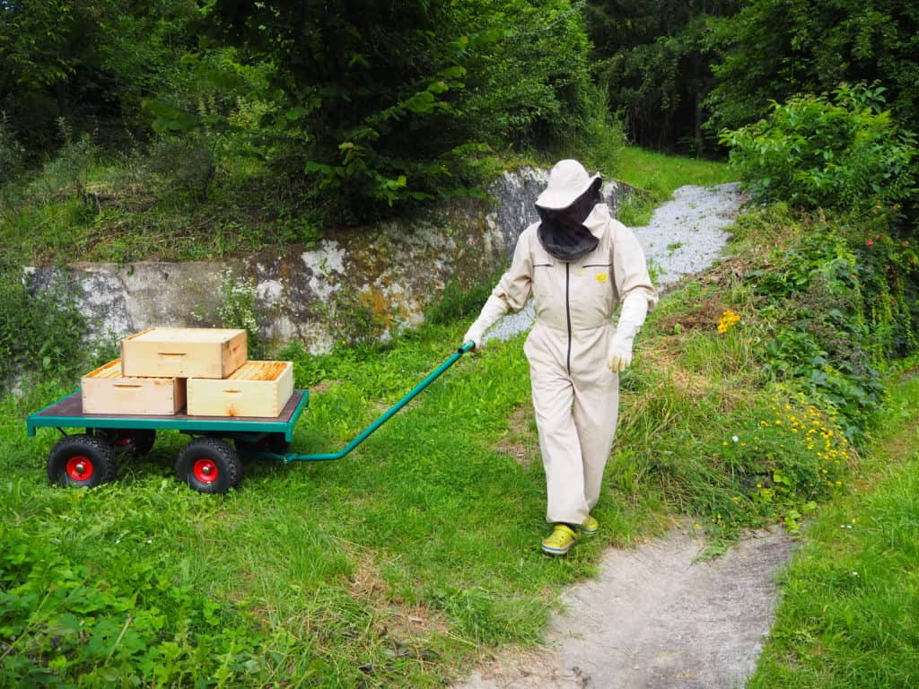 Honig ernten
