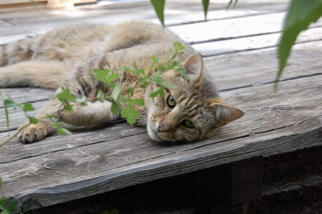 Kater Moritz entspannt lieber auf der Terrasse...