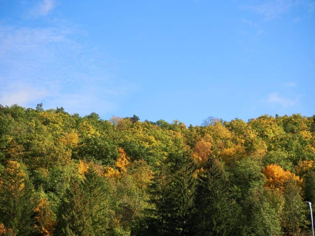 Herbstwald und blauer Himmel