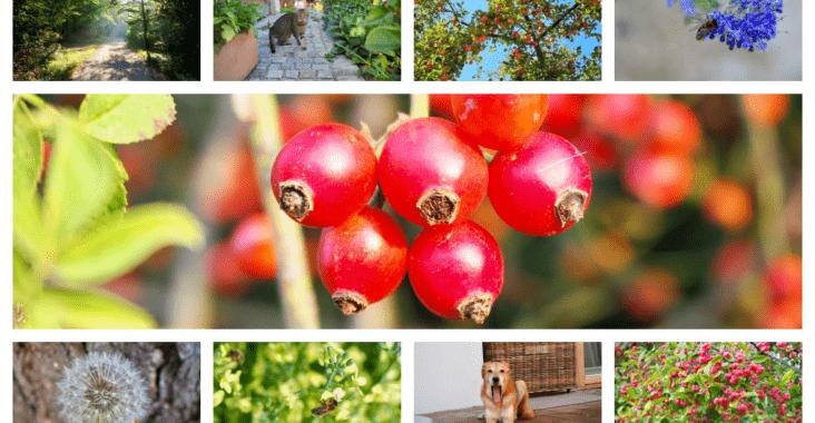 Fotos des Monats September