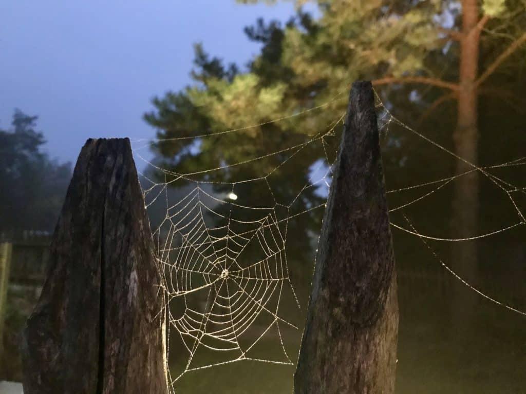 Spinnennetz im Morgengrauen