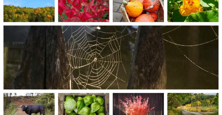 Oktober-Fotos