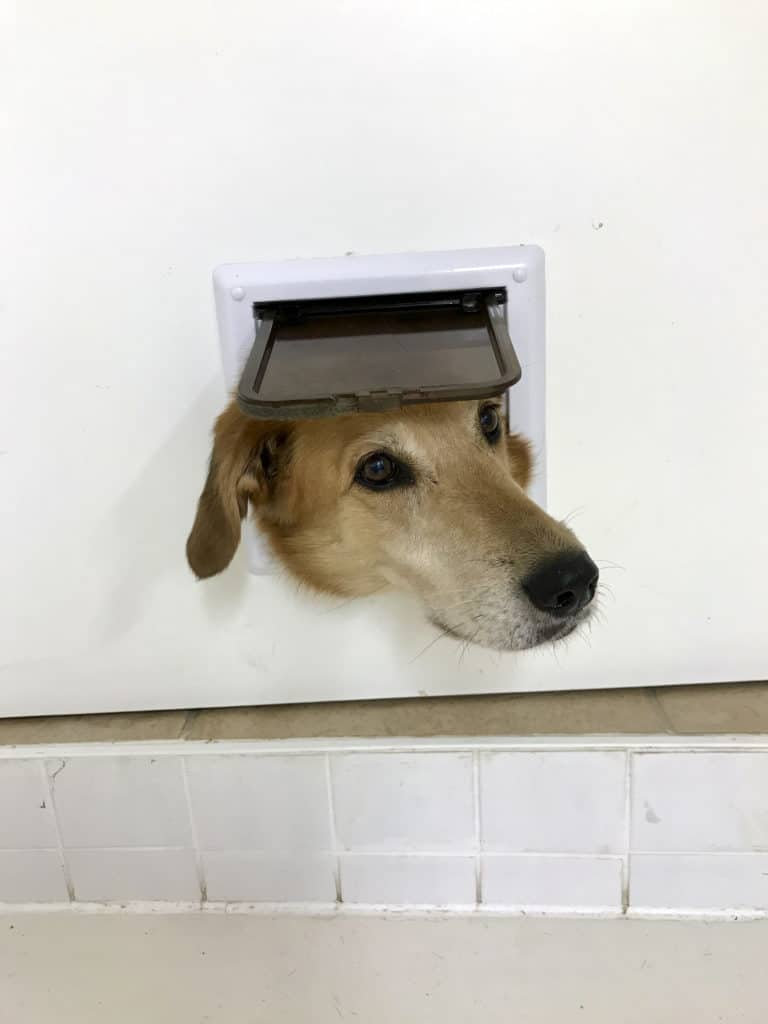Hund in Katzenklappe