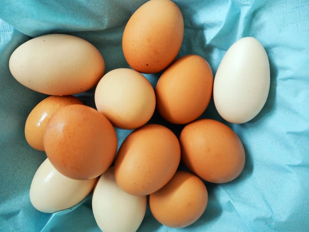 … und der Osterhase freut sich hoffentlich über die Eiervielfalt