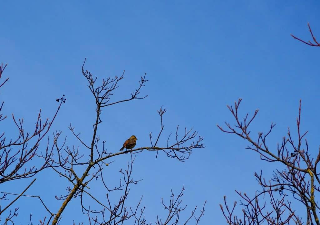 Auch im März sind die Bäume noch kahl…
