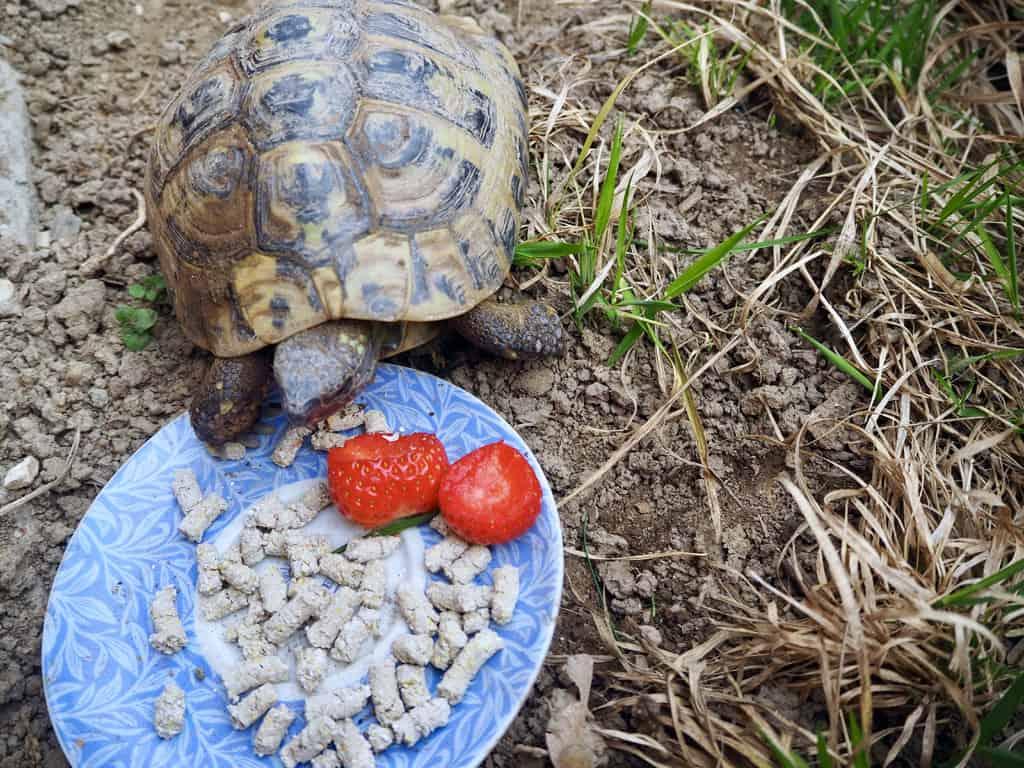 … aber sobald Schildkröte Lilli aus dem Winterschlaf erwacht…