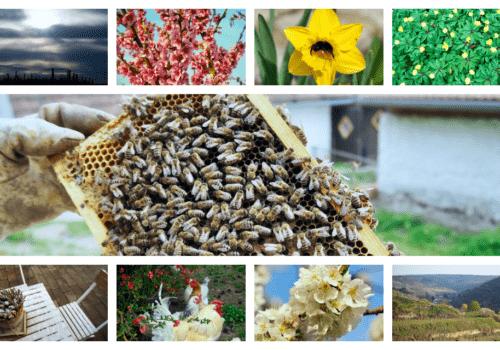 April-Fotos