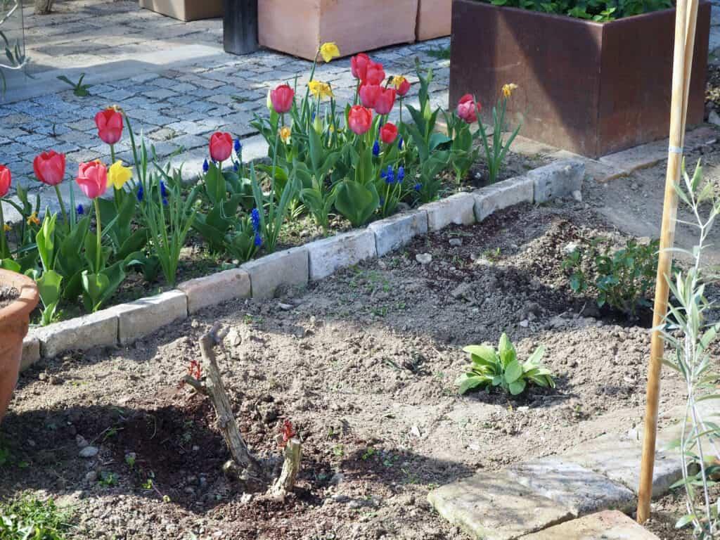 Frühlingsblumen-Beet