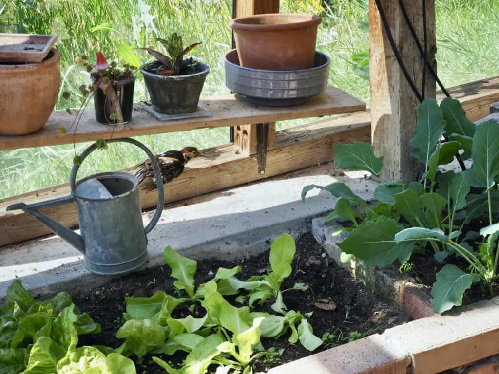 Specht im Gartenhaus