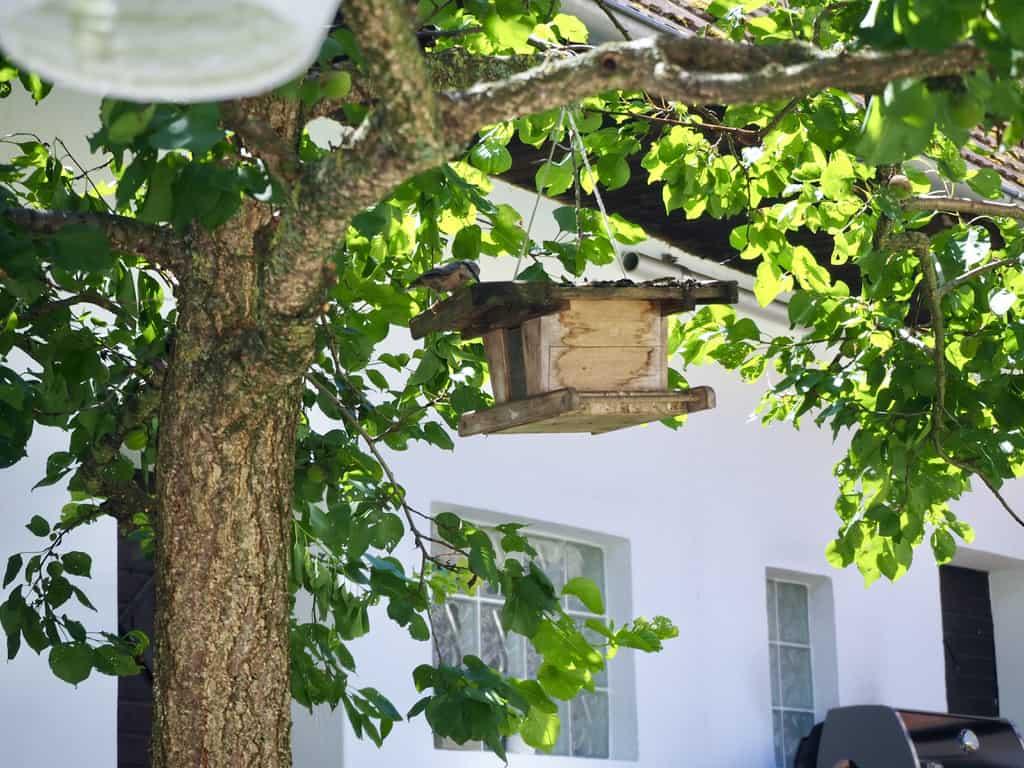 Vogel am Vogelhaus